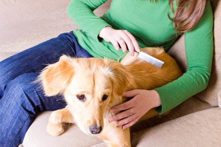 home owner: Young girl sitting on couch and combing her dog