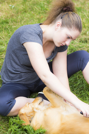 dog grooming: Young woman sitting on grass and combing retriever dog Stock Photo