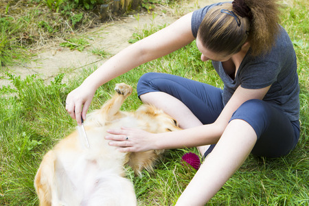 dog and owner: Young woman sitting on grass and combing retriever dog Stock Photo
