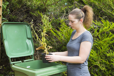 shrunken: Young woman wasting dry plants in green bin Stock Photo