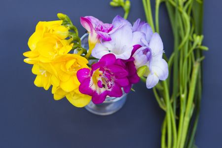 freesia: Bouquet of colorful freesia flowers close up