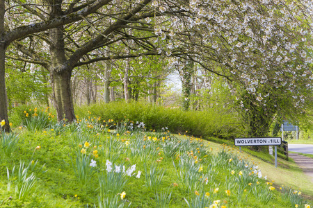 milton: MILTON KEYNES, ENGLAND - APRIL 22, 2016: Blossoming daffodils near turn to Wolverton Mill in spring day Editorial