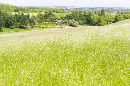 Summer landscape with field and forest in distance, England