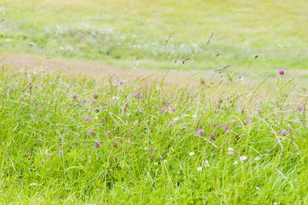 Wild field herbage with clover in sunny day Stock Photo