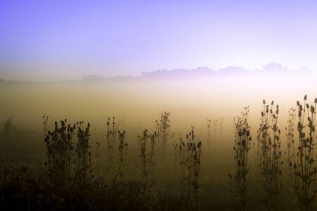 colorful sunrise: Colorful sunrise