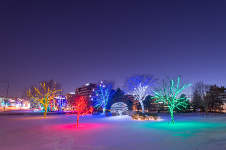 Trees decorated and illuminated with Christmas lights