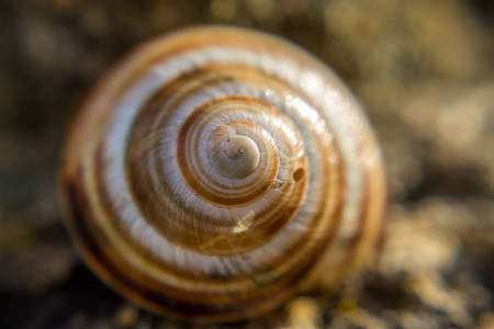 Close up of a snail shell