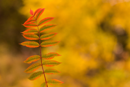 Thin tree branch with green reddish leaves, blurred background, abstract 写真素材