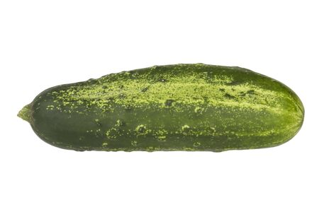 gherkin: Green gherkin, isolated on white background. Stock Photo