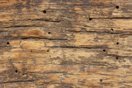drywood: Close Up of texture of termite damaged wood.
