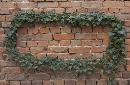 Frame of green ivy twigs on brick wall with empty place for your text. Фото со стока