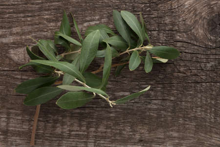 Olive leaves on wooden background. Top view 免版税图像