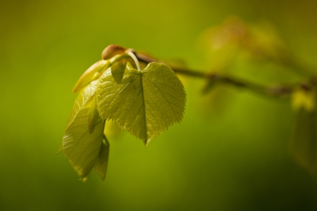 natue: Young green leafs and buds in natue  Stock Photo