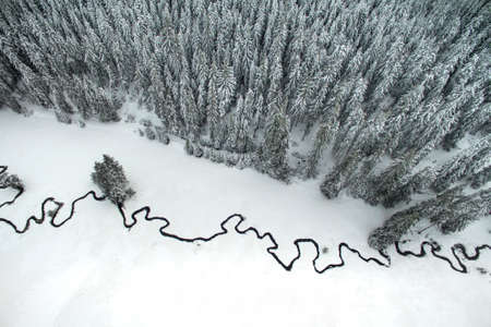 meandering: Aerial winter landscape of high pine trees and a little meandering stream.