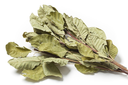 prophylaxis: Several dried twigs with leaves of smoke tree Cotinus Coggygria on white background.