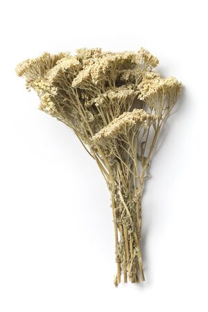curative: Bouquet of dried flowers yarrow on white background. The yarrow is known as an herb widely used with curative intent.