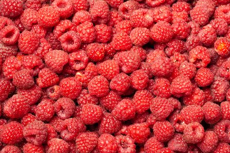 Ripe and fresh red raspberries as a natural background.