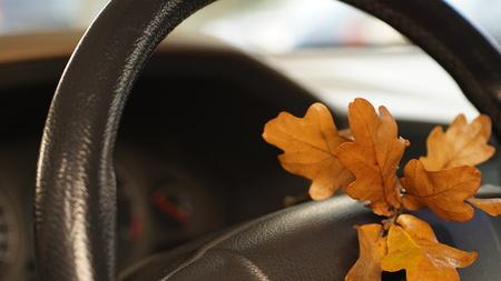 oak leaves in car Фото со стока