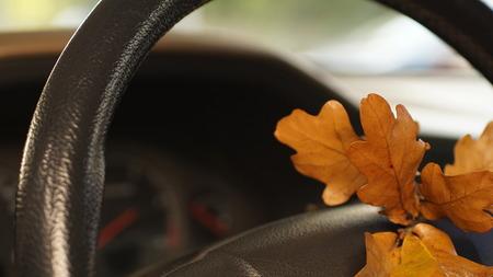 oak leaves in salon of a car