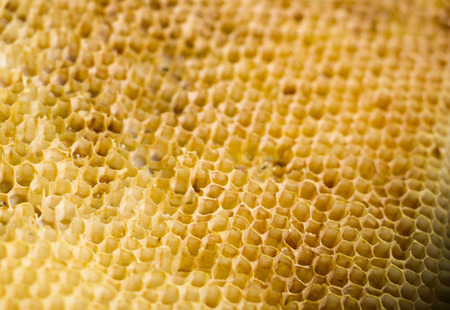 old honey combs with the remains of honey without bees Stock Photo