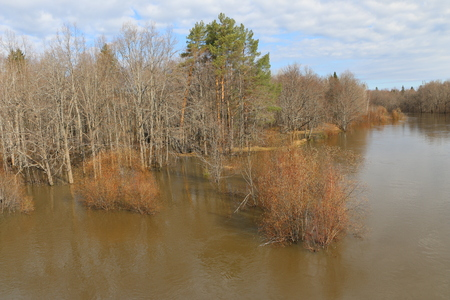 spring high water. spilling  river in  spring in  forest. flood in t spring forest.
