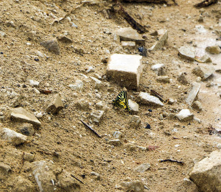 yellow butterfly machaon on the background of a landfill of sand and construction debris Imagens