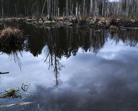 forest autumn swamp in the middle of a broken forest. marshland among fragments of trees, snags and broken birches. running streams of streams form large marshy puddles in the forest. Reklamní fotografie