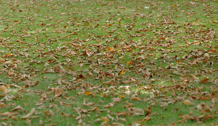grouping: Grass lawn with fallen leaves on a autumn day