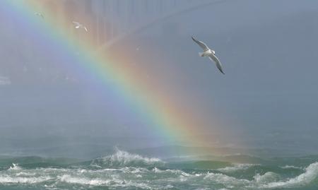 Seagull on Niagara Falls Canada side