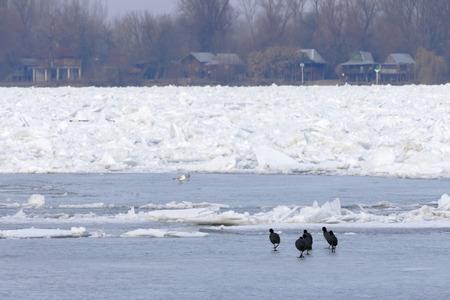 tabular: Frozen Danube river in Belgrade, Serbia Stock Photo