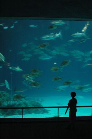 view of the aquarium photo