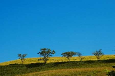 grasslands and trees photo