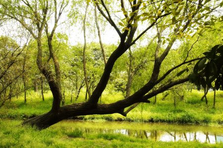 forest, grass,small river,close photo