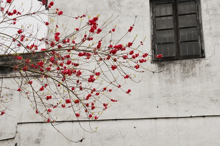 Chinese older town,red flower and window photo