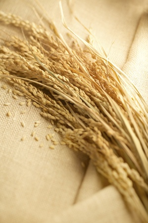 wheat lay on linen photo