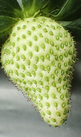 close: Green strawberry close up