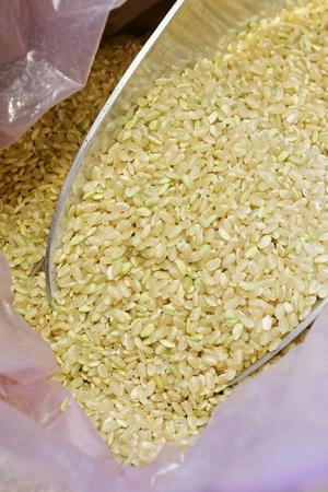 close: Rice grain in shovel in bag   close up Stock Photo