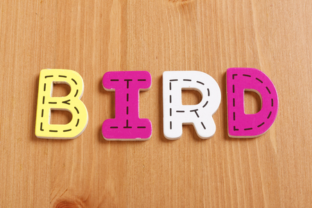 latter: BIRD, spell by woody puzzle letters with woody background