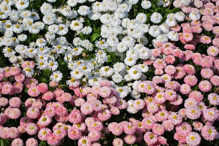 gartenanlage: A colorful summery flower bed, Ein sommerliches Blumenbeet