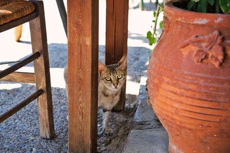 kreta: Junge Katze unter einem Tisch in einem Restaurant auf Kreta,Young cat under a table in a restaurant on Crete Stock Photo