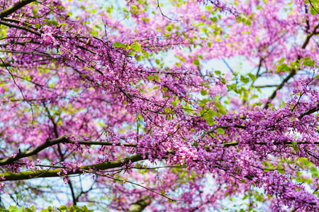 many branches: a tree with many branches full of pink flowers