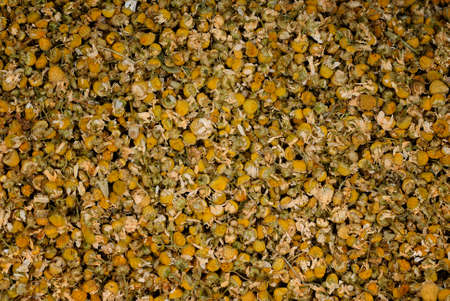 german chamomile: a large amount of dried chamomile flowers for the production of chamomile tea