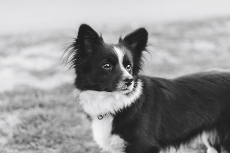 Dog black and white is standing on the street