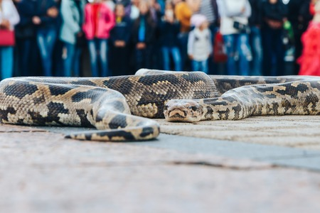 The big snake lies on the square in front of a group of people