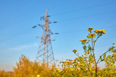 Field grass against the background of a mast of a high voltage power line in blur Stockfoto