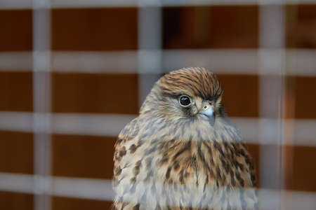 Close-up of a bird of prey sitting behind the bars of a cage