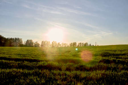 Summer morning in the field under the bright sun