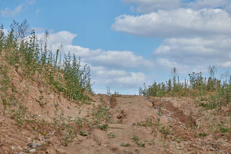 A sandy road with overgrown grass with traces of construction equipment