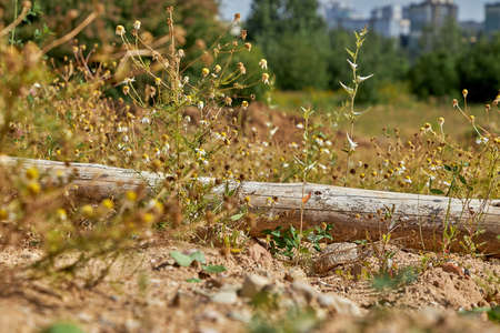 A wooden log lying in the grass against the background of the city 版權商用圖片 - 161547164