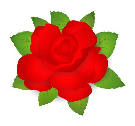 Red Rose with green leaves. Vector illustration on white background Vector